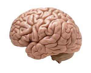 The Human Mind & Usability